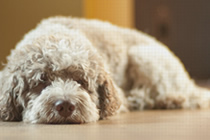 dogplus – Hundezubehör für Profis - Der etwas andere Hundeshop